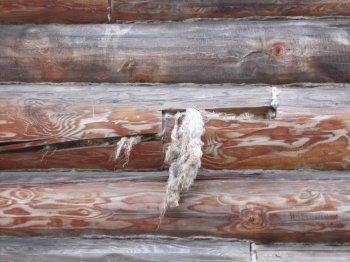 Нещільно свити, з стирчать волокнами або нещільно забитий джгут буде розтягнуто птахами